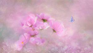 Hintergrundbild Flower