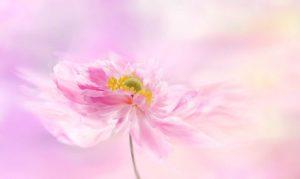 Seelengespräch - Glaube an Wunder - Ursula Thomas